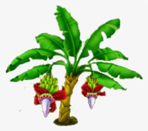 Banana Tree PNG, Transparent Banana Tree PNG Image Free Download.