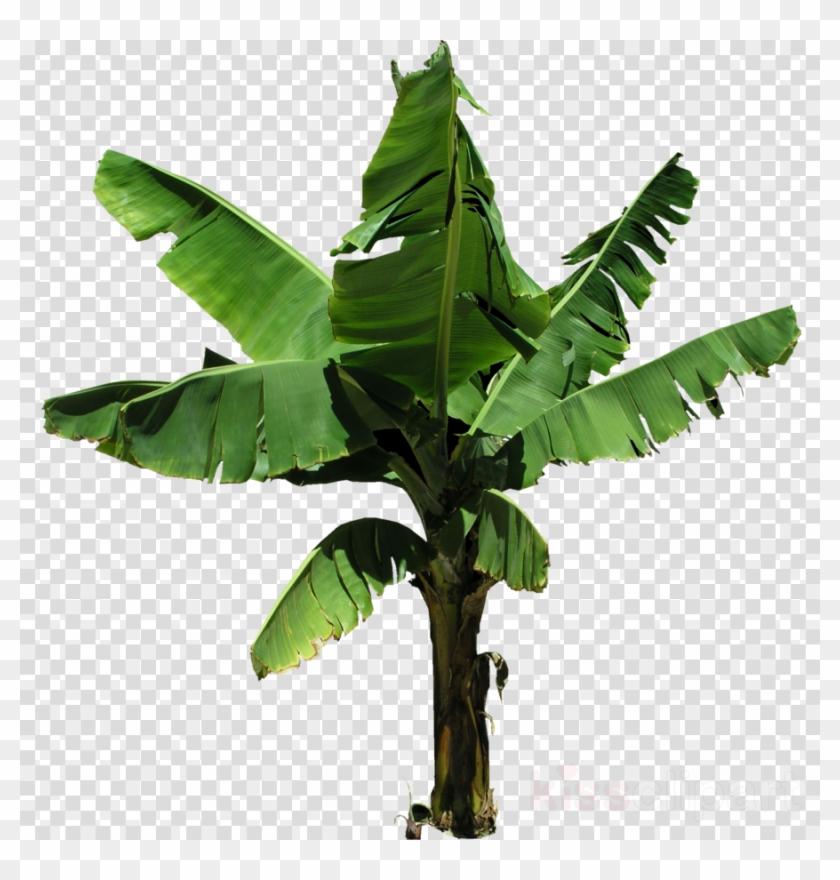 Bananaplant Png Clipart Banana Clip Art.