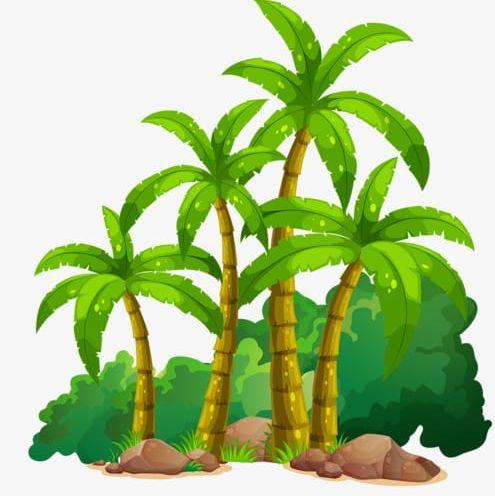Coconut Tree PNG, Clipart, Banana, Banana Tree, Cartoon, Cartoon.