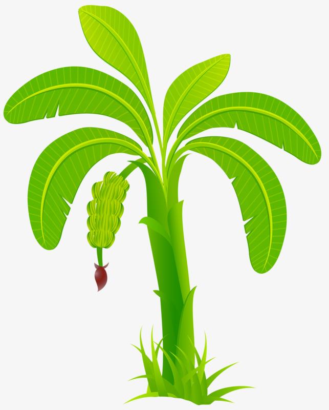 Green Banana, Banana Clipart, Banana, Trees PNG Transparent Image.