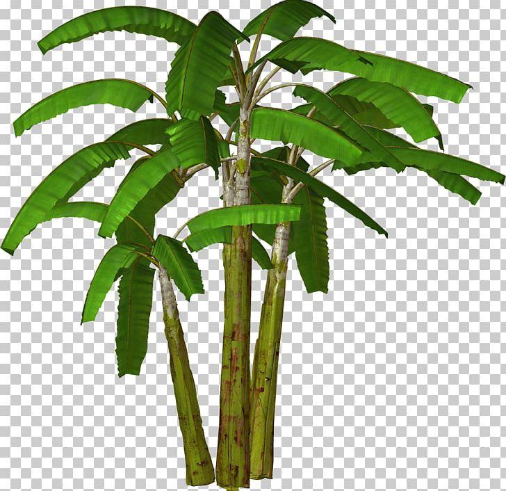 Banana Tree PNG, Clipart, Arecales, Banana, Banana Peel, Banana.