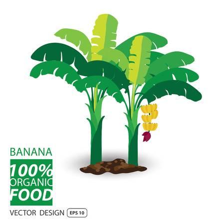 8,670 Banana Tree Stock Illustrations, Cliparts And Royalty Free.