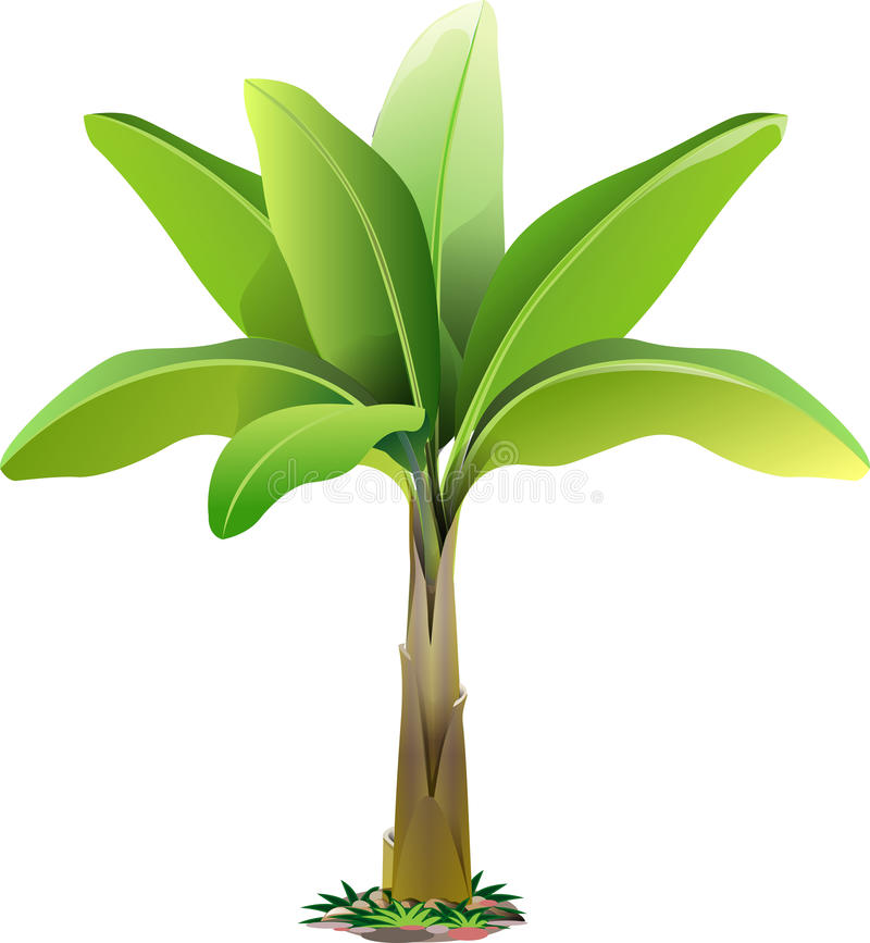 Extremely Banana Tree Clipart Unusual Collection Of 14 Free Plant.