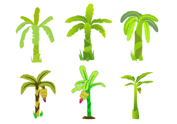 Free Banana Tree Vector.