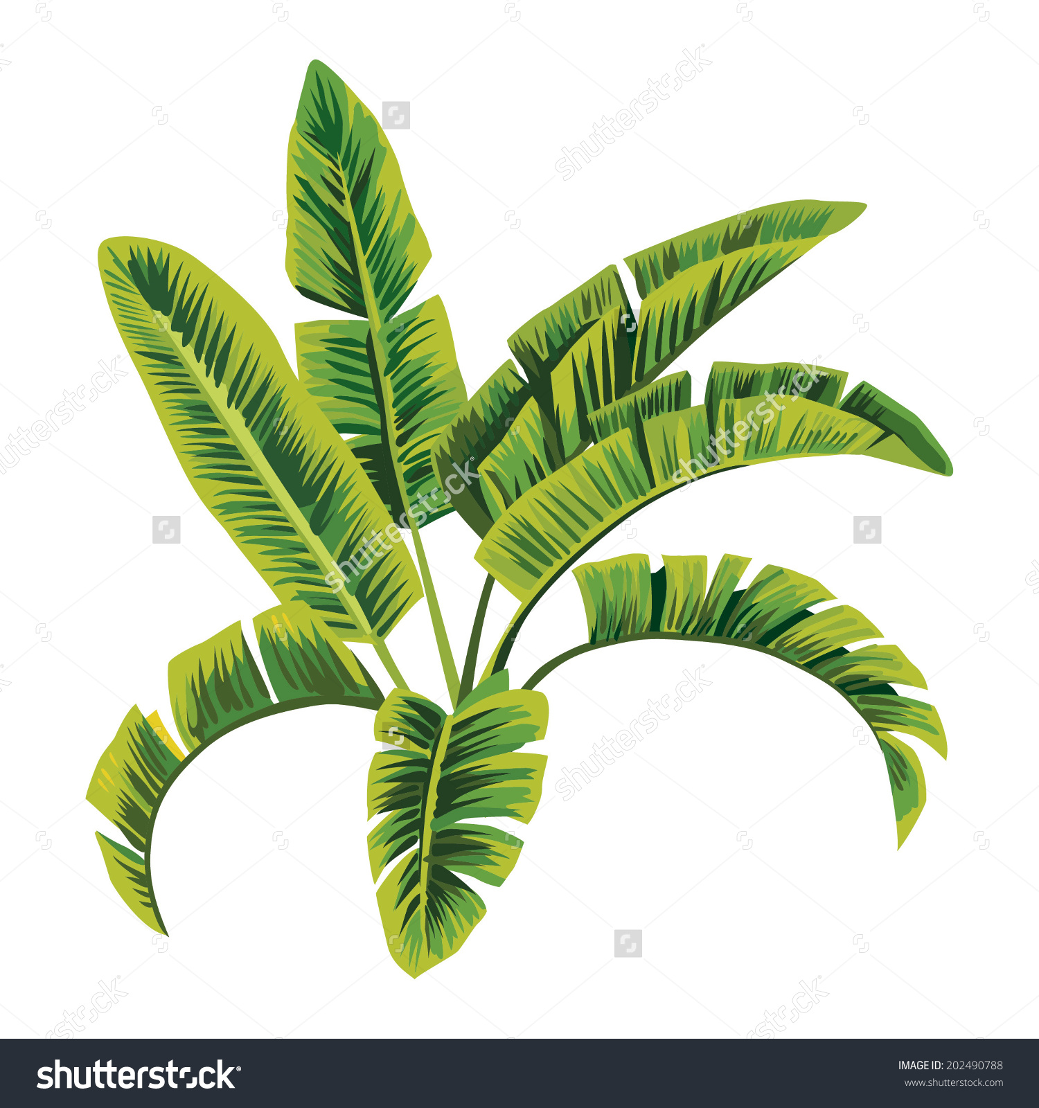 Painting Tropic Palm Banana Leaves Tree Stock Vector 202490788
