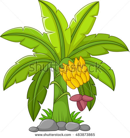 Banana Tree Vector Stock Images, Royalty.