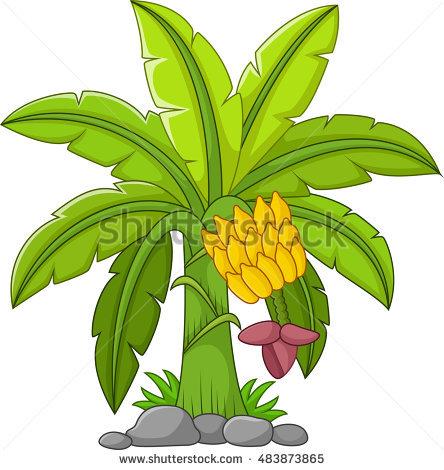 Banana Tree Vector Stock Images, Royalty.