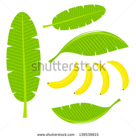 Banana Leaf Stock Photos, Royalty.