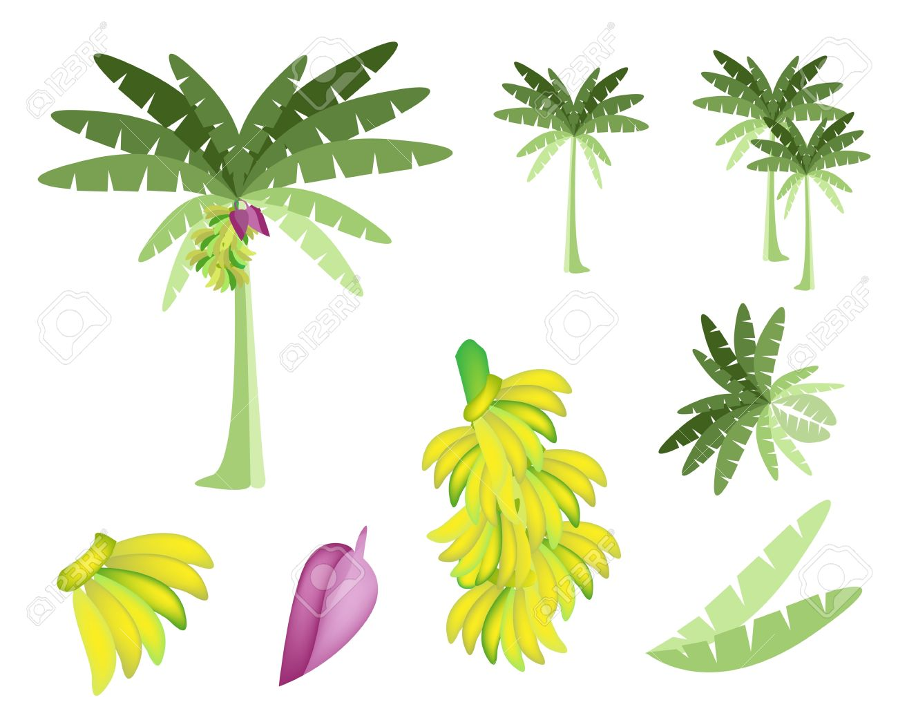 Banana Tree Leaf Clip Art.