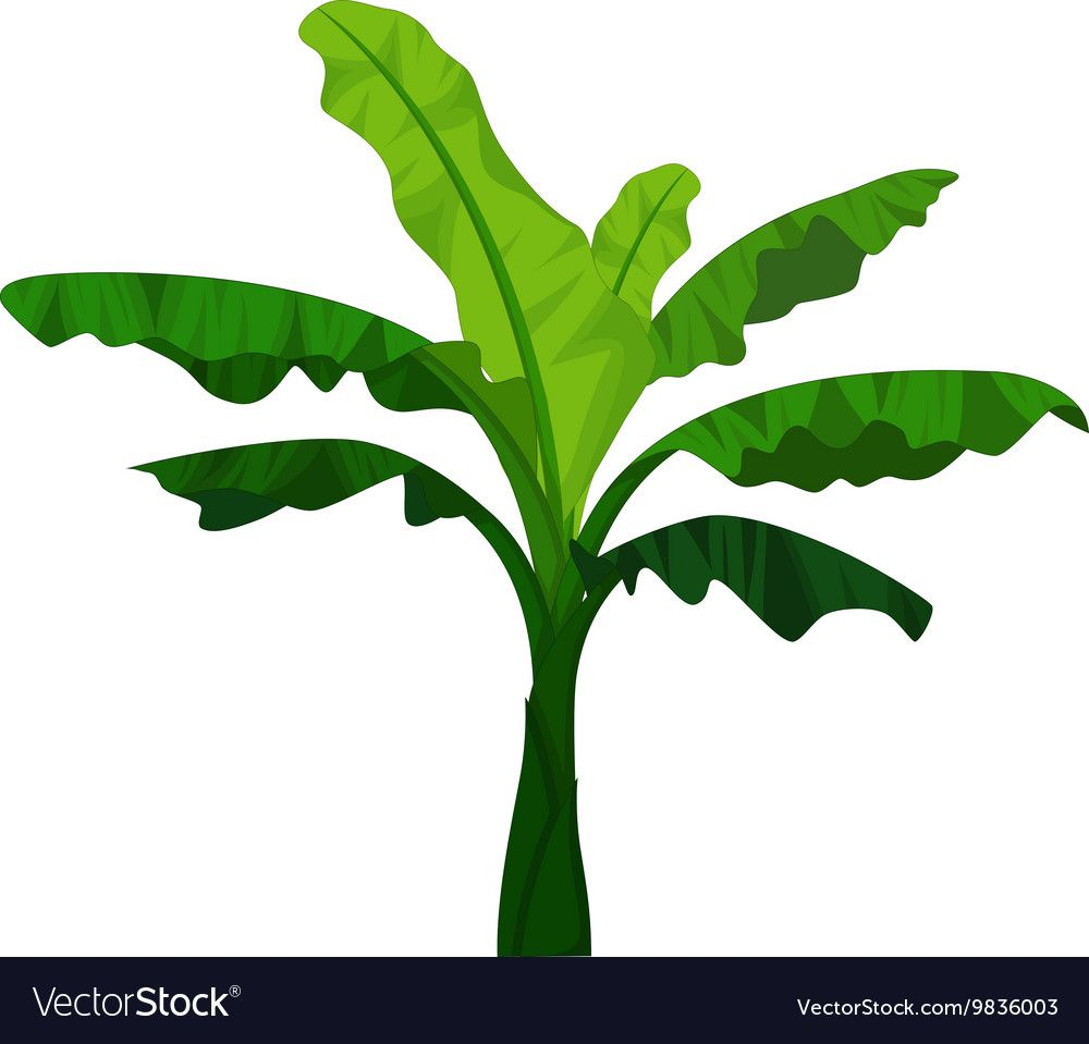 Banana tree cartoon for you design Royalty Free Vector Image.