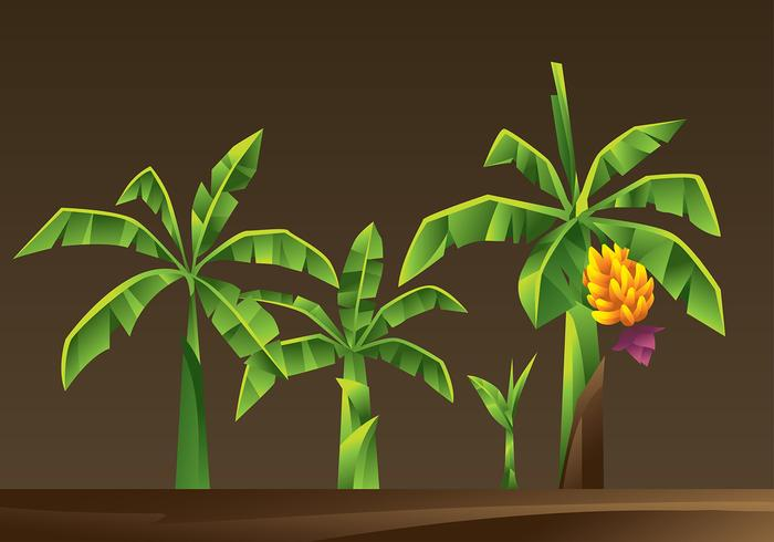 Banana Tree Cartoon Vector.