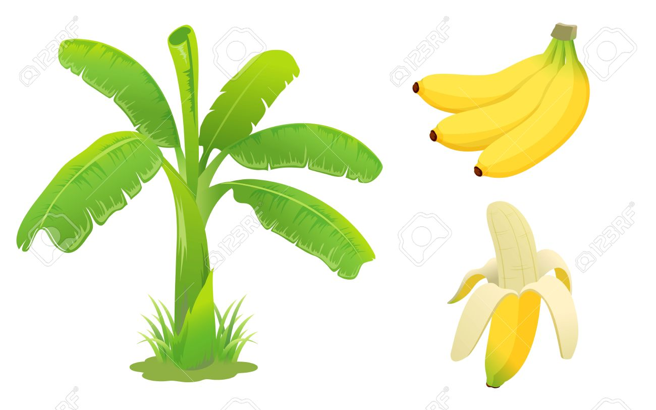 Banana Tree Vector Free Download Clip Art.