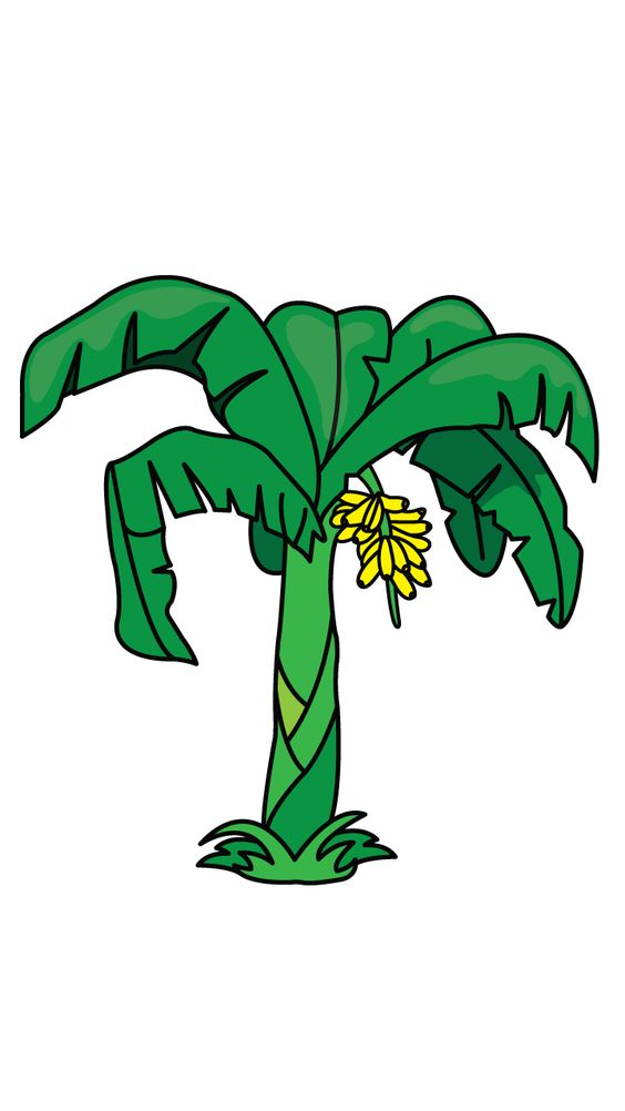 Drawing Of Banana Tree.