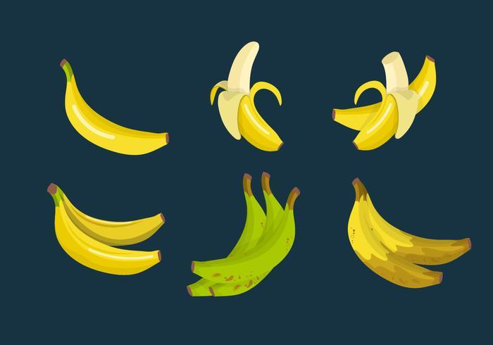 Plantain Banana Vector Collection.