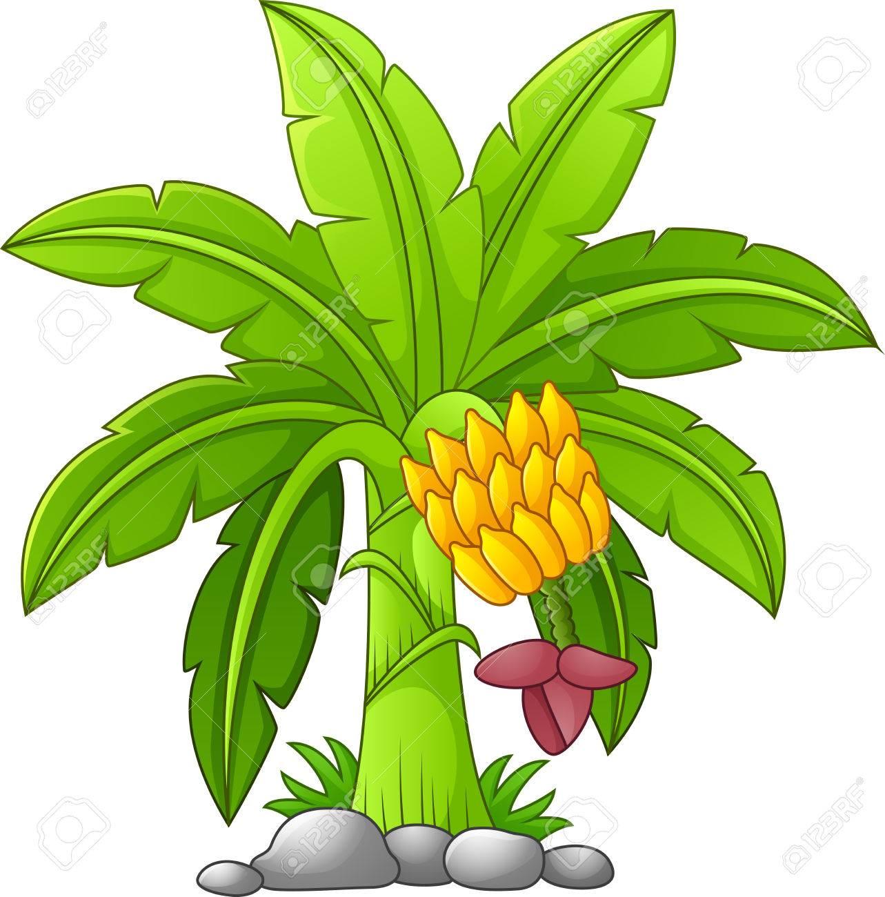 Banana tree clipart 4 » Clipart Station.