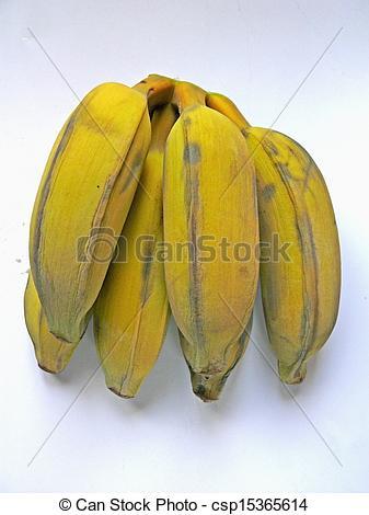 Stock Photography of Yellow Banana, Musa X paradisiaca L, Musaceae.