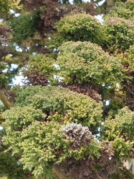 Kerria japonica free stock photos download (19 Free stock photos.