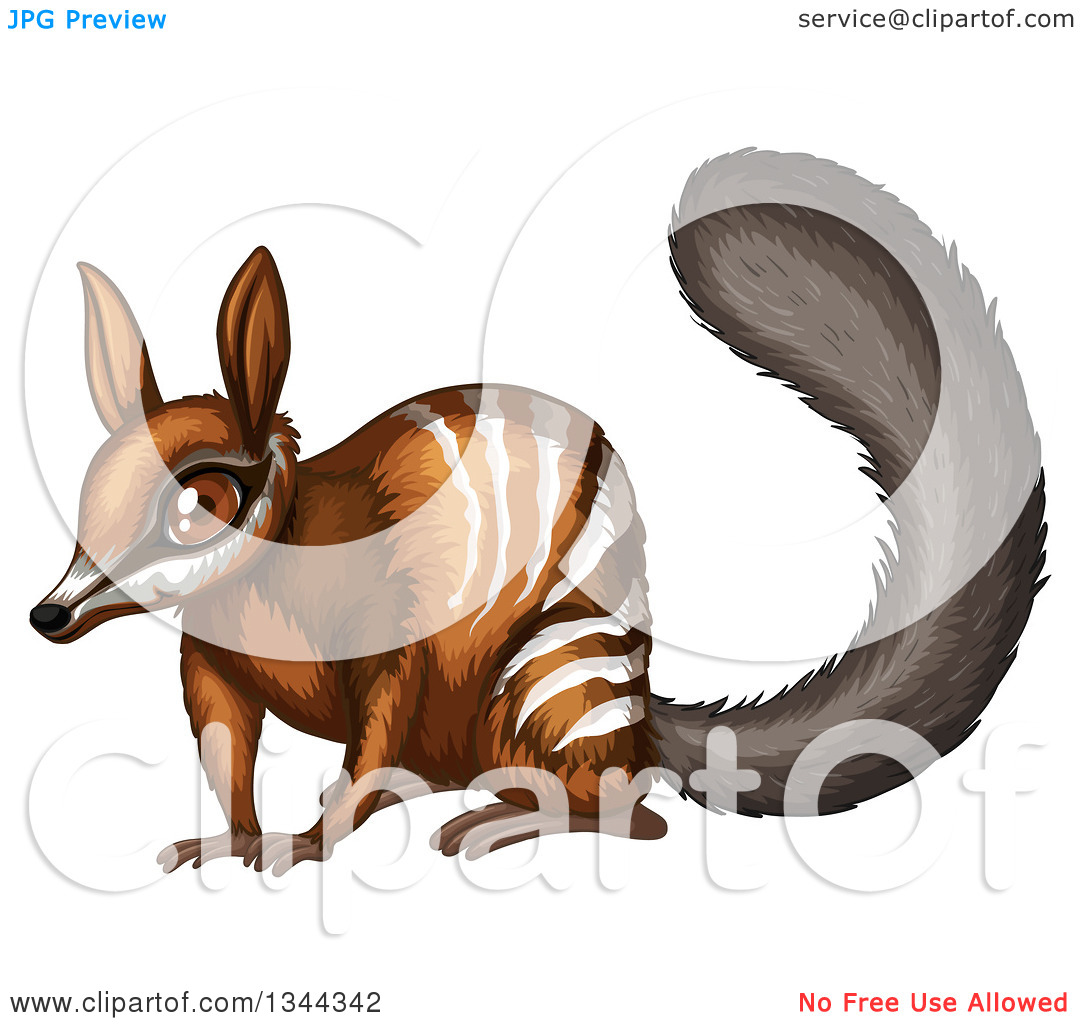 Clipart of a Cute Numbat Banded Anteater.