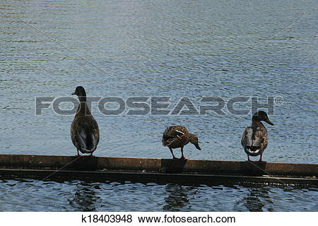 Stock Illustration of tree ducks k18403948.