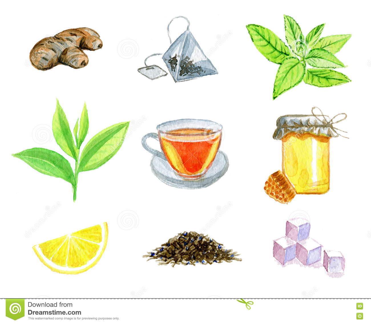 Watercolor Set Of Ginger, Teabag, Mint, Tea Leaf, Tea Cup, Bank Of.