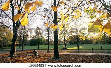 Stock Photography of bank, austria, autumn, back light, calf, calm.