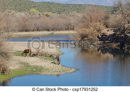 Stock Images of Salt River Wild Horses Arizona.