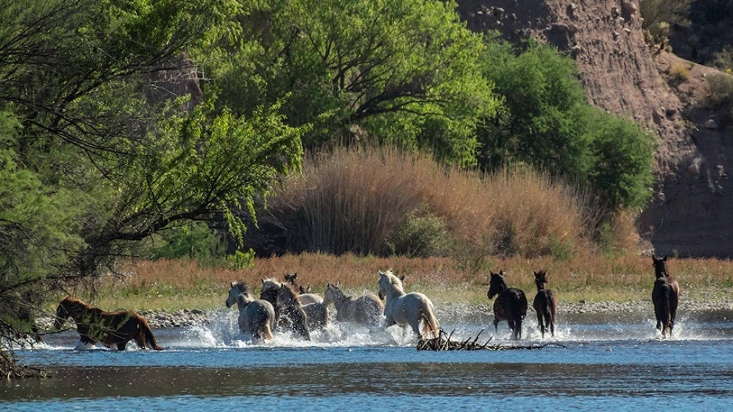 1000+ images about Saving the Wild Horses of the Salt River on.