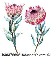 Banksia Clip Art Vector Graphics. 17 banksia EPS clipart vector.