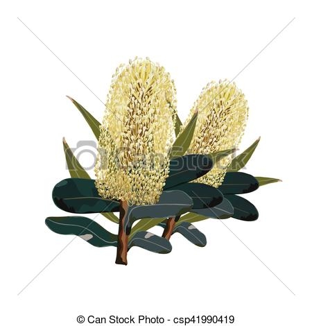 Vector Clip Art of Banksia Green.