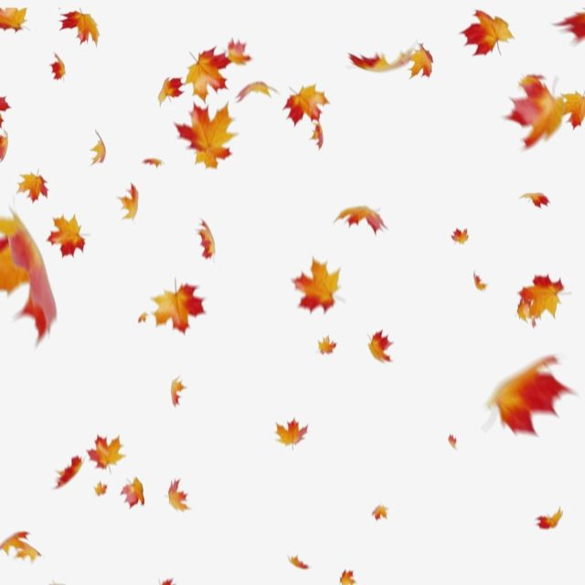Maple Leaves Falling, Maple, Autumn, Leaves PNG Transparent.