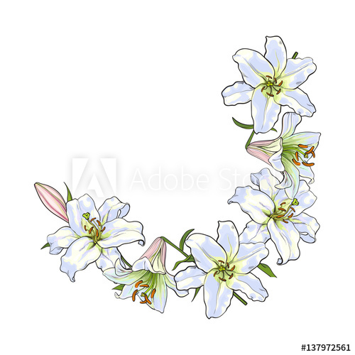 Half round frame of white lily flowers, decoration element.