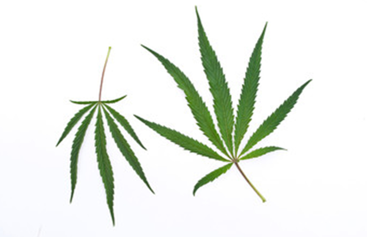 Pot law takes effect, but questions remain.