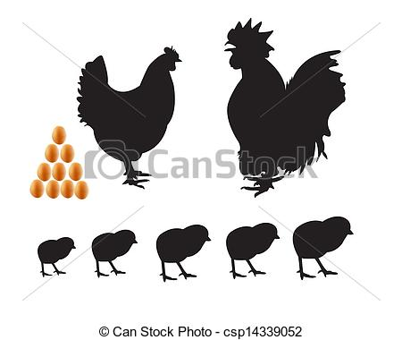 Clipart Vector of bantam chicken chicks eggs on a white background.