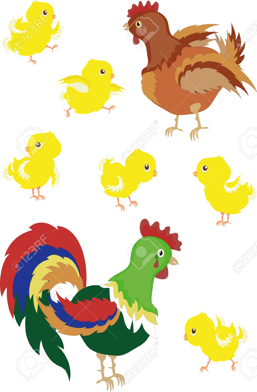 Rooster,hen,chicks Isolated Royalty Free Cliparts, Vectors, And.