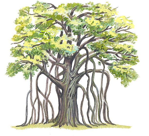 Banyan tree clipart 8 » Clipart Station.