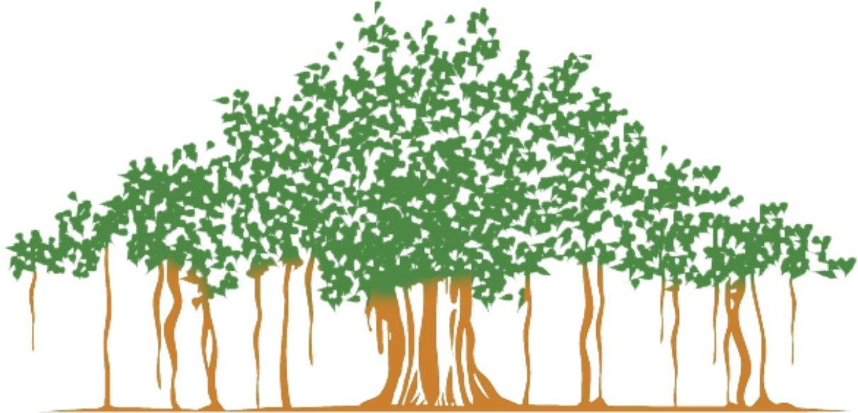 Banyan Tree in 2019.