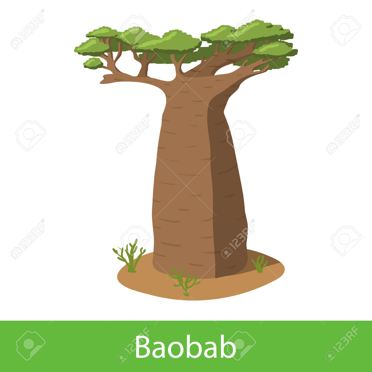 Baobab Cartoon Tree. Single Illustration On A White Background.