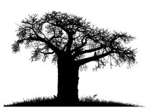 Baobab tree clipart black and white.