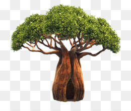 Baobab Tree PNG and Baobab Tree Transparent Clipart Free.