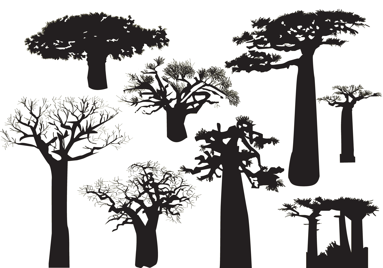 Baobab Tree Silhouette.