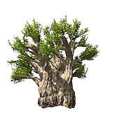 Baobab Clip Art.