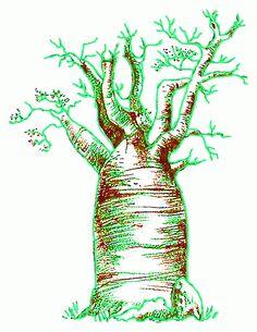 Charcoal drawing, Madagascan baobabs. Delaney.
