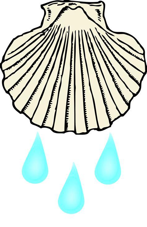 Baptism Shell.