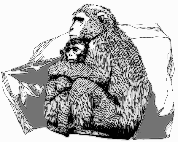 Free Macaque Clipart, 1 page of Public Domain Clip Art.