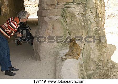 Stock Photograph of man watching Barbary Macaque / Macaca sylvanus.