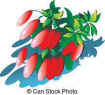Barberry Vector Clip Art Royalty Free. 335 Barberry clipart vector.