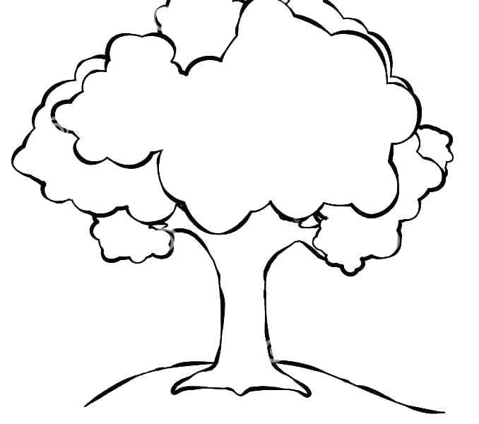 Old Oak Tree Drawing.