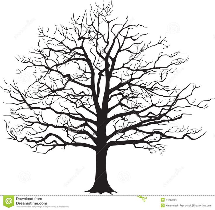 Oak Tree Clipart Black And White.