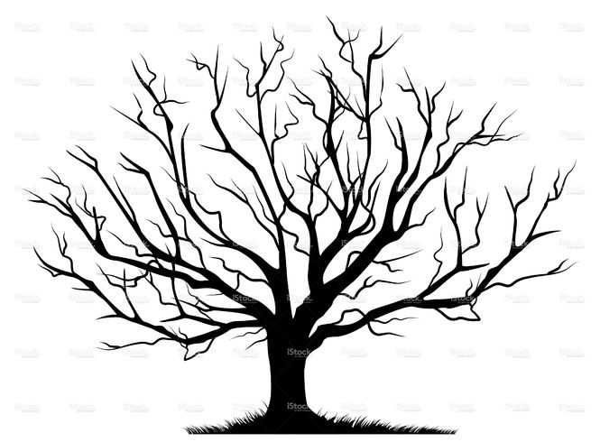 Deciduous Bare Tree with Empty Branches Black Silhouette isolated on.
