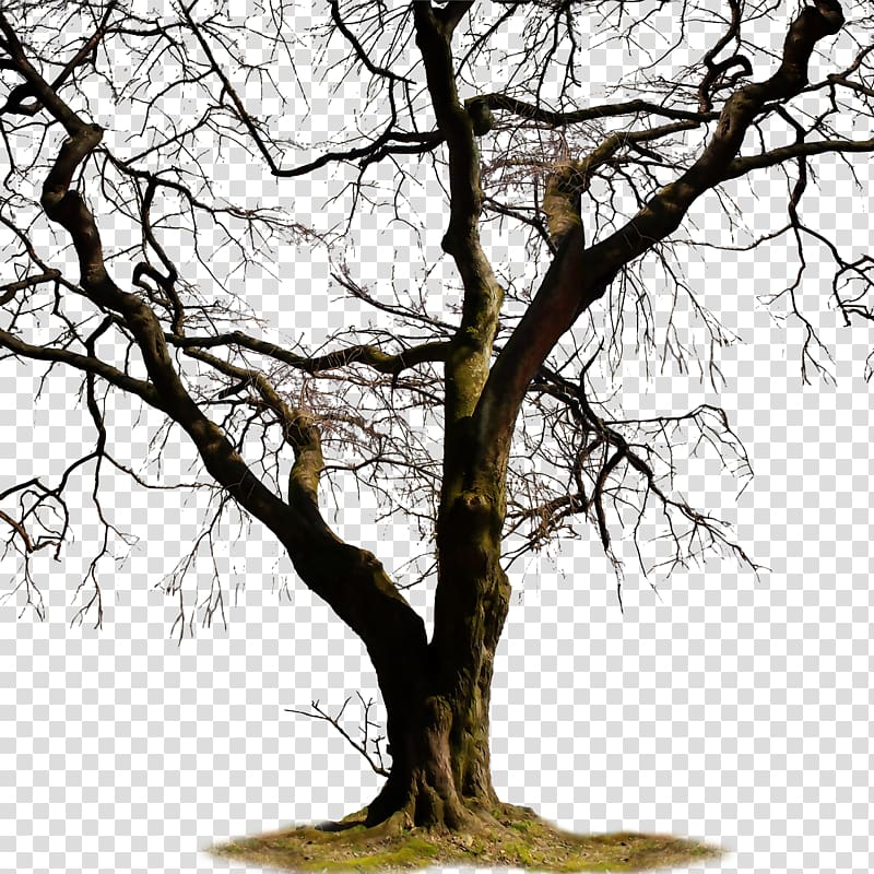 Painting of brown bare tree, Twig Trunk Tree , of dead trees.